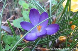 gallerie fleur 2