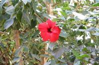 gallerie fleur 3
