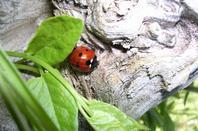 gallerie insecte 1