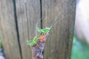 gallerie insecte 2