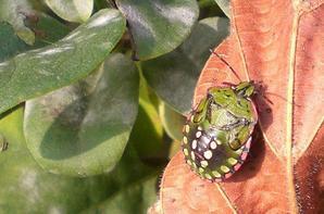 gallerie insecte 3