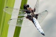 gallerie insecte 4