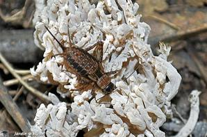 gallerie insecte 5