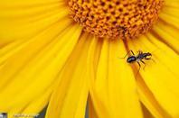 gallerie insecte 6