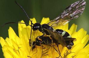 gallerie insecte 7