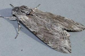 gallerie insecte 8