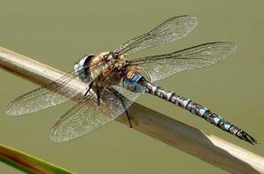 gallerie insecte 9