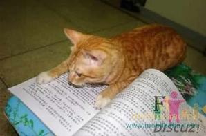 il aime la lecture !! mdrrr
