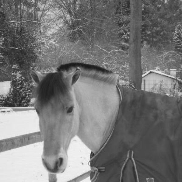 juju dans la neige