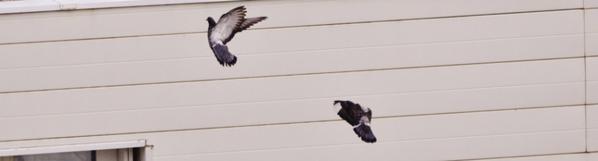 « La télé, c'est tellement con que même les pigeons ne se posent plus sur les antennes. » Jean-Marie Gourio ; Extrait du Brèves de comptoir