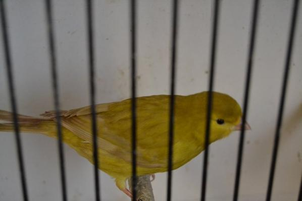 bruin pastel geel