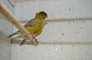 zwart pastel geel intensief en schimmel