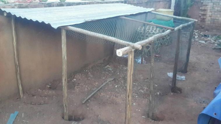Nouveau cage de repro en cours