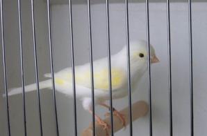 mosaïque jaune