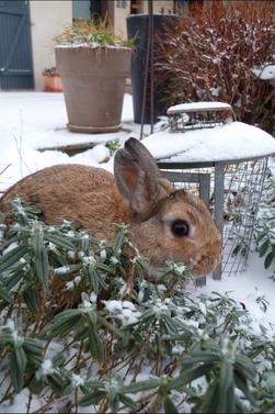 Milo dans la neige !