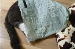 Bonobo et le sac plastique...