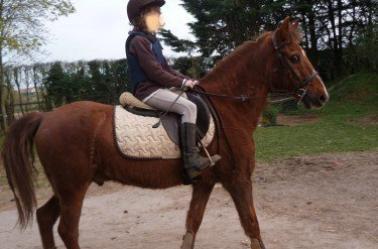 Les chevaux qui ont marqué ma vie