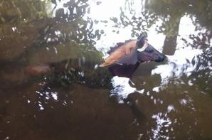 balade en rivière
