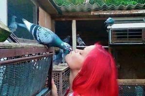 quelque photo de pigeons