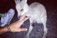 Anais en Australie