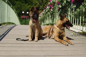 Igor et Fidjy
