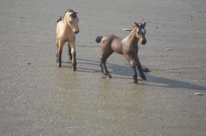 shooting du 08/03/15                      La plage !!!!!!!!!!!!!!! 2/2