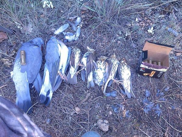 chasse du 16 octobre 2015