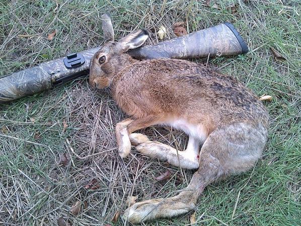 reprise de la chasse du 9 et 10 octobre ..dimanche et lundi