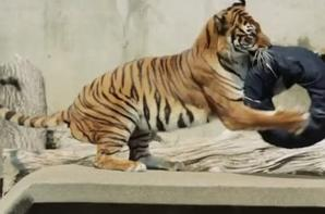 L'article du jour : la mode à la manière des animaux !