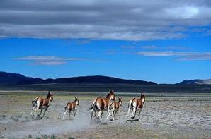 La population d'animaux sauvages augmente au Tibet