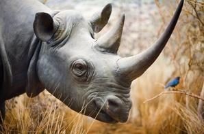 Halte au trafic d'espèces menacées de disparition !!!