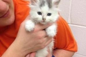 Une seconde chance pour des chatons menacés d'euthanasie