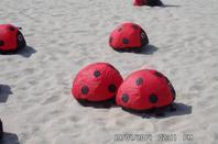 les cervolant sur une plage