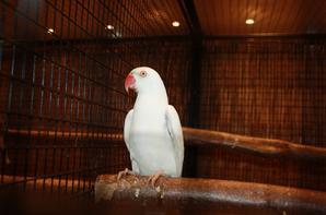 Des oiseaux et encore des oiseaux