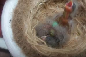 Quelques nids
