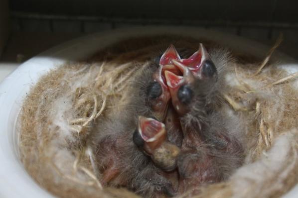 Quelques nids du 2ème tour