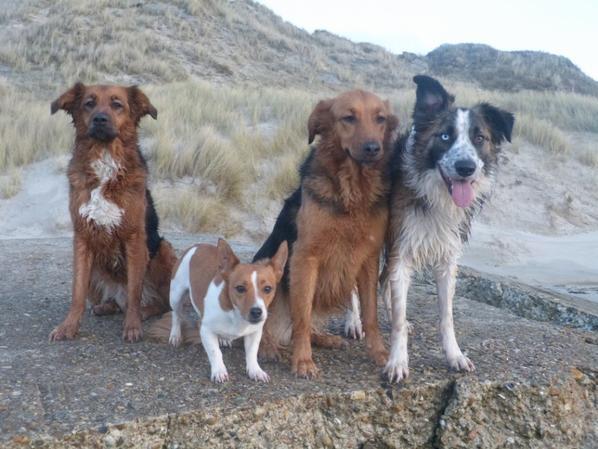 Mes loups à la plage !