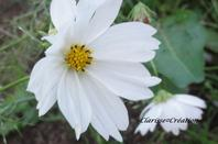 """""""Les fleurs il y en a à toutes les saisons et elles embellisse notre monde""""de moi"""