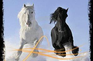 One Shot 2 : L'amour est a cheval.