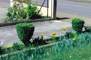 LES PLANTES EN FLEURES !!!!