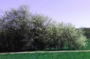 NATURE EN FLEURE