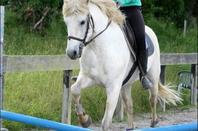 Mon poney de coeur ♥