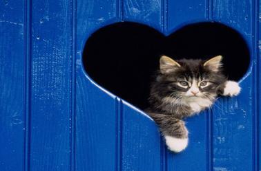 chats alors!!!!!