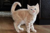 chat la la