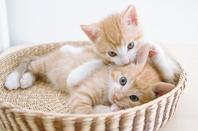mignonts chatons
