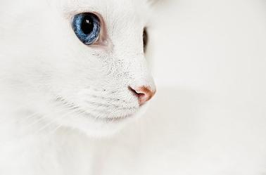 tout blanc tout beaux