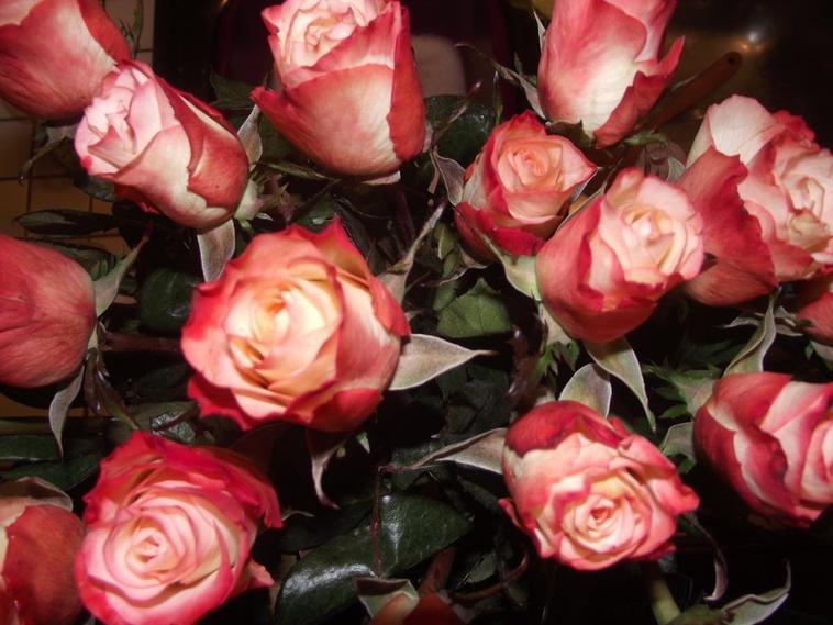 coucou du soir en  rose