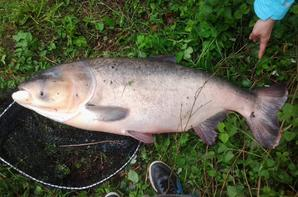 mon plus gros poisson