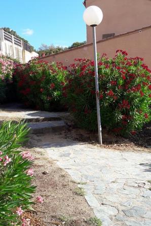 Les lauriers roses entourent la maison