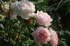 Édition spéciale : le jardin français de Shinjuku